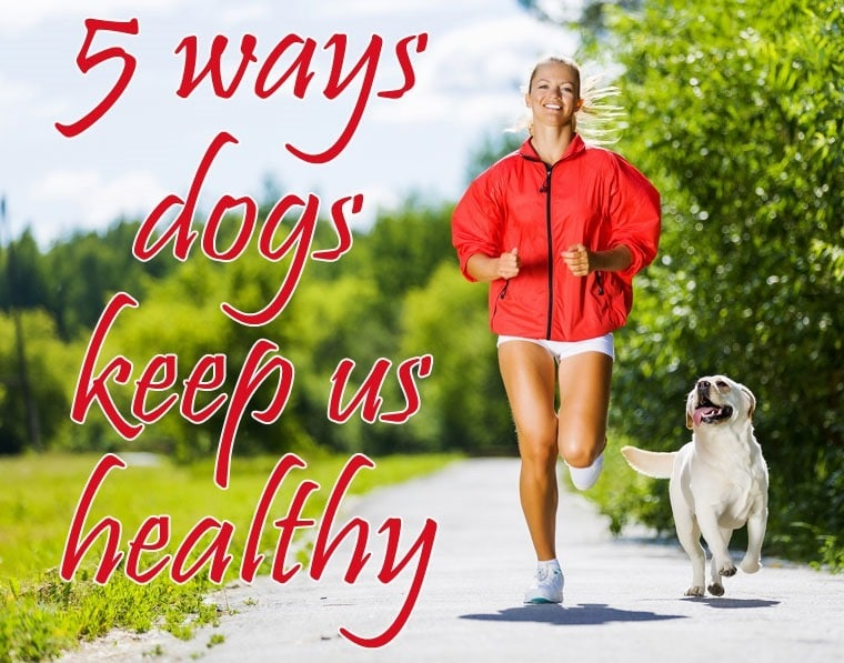 5 ways dogs keep us healthy from This Mama Cooks! On a Diet - thismamacooks.com