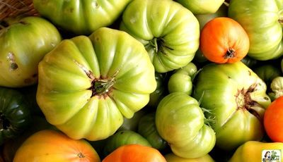 How to Make Green Tomato Ketchup