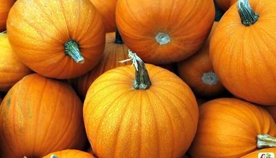 How to cook a fresh pumpkin