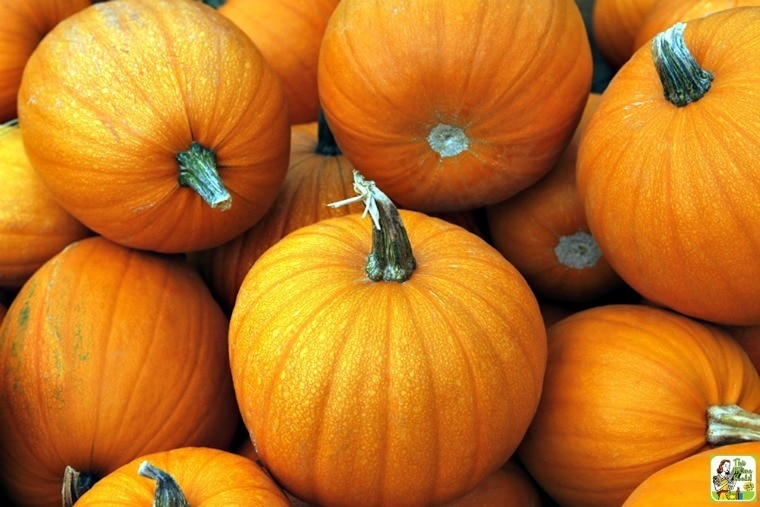 How to Cook Fresh Pumpkin